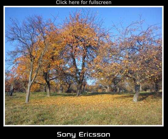 vscreens.com Fotoanzeige am Notebook Bildschirm (Screenshot)